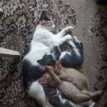 Отдам котят от умной кошки, в г.Уральск