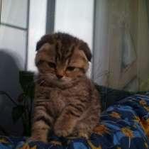 Котята -вислоухие и прямоухие от 2700, в Иванове