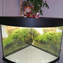 Отдам аквариум даром, в Москве