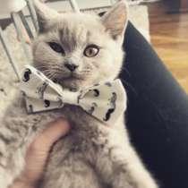 Продам милого котёнка Scottish Strite, в г.Кламар