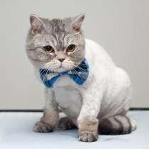 Стрижка кошек в Орске, в Орске