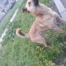 Отдам собаку, в Прокопьевске