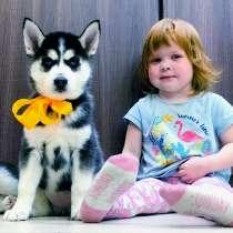 Красивые черно-белые щенки хаски, в Ставрополе