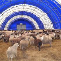 Овчарня, в Воронеже