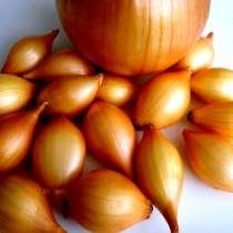 Продаю лук севок озимый, в Чебоксарах