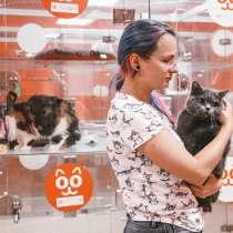 Передержка для кошек, в Люберцы