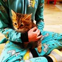 Котики в добрые руки, в Краснознаменске