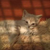 Котята, в г.Луганск