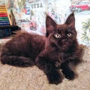 Мейн Кун котята из питомника, в Москве