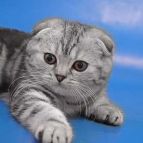 Красивые котята, в Москве
