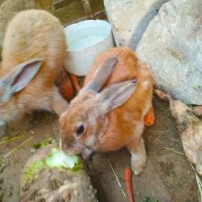 Кролики, в Волоколамске