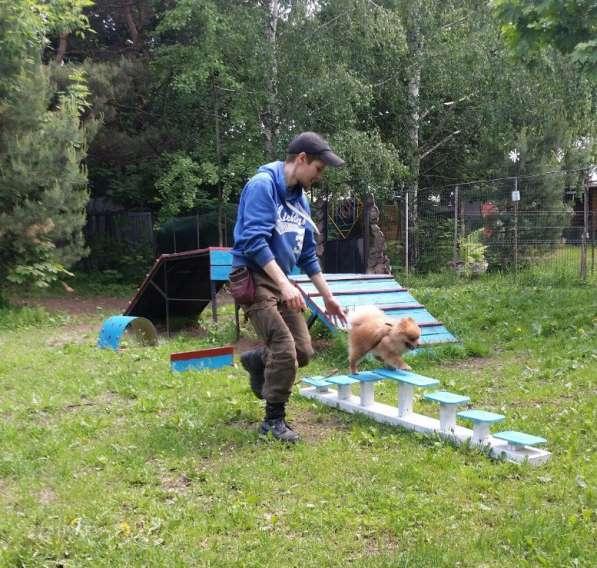 Передержка и дрессировка собак в Раменское фото 18