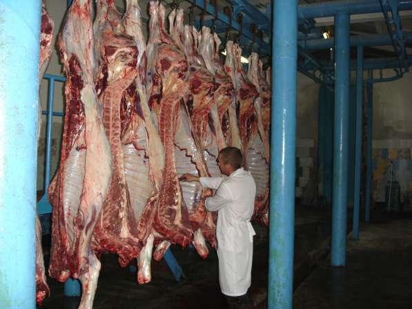 ОПТ. Мясо говядина от надежного поставщика с разумной ценой