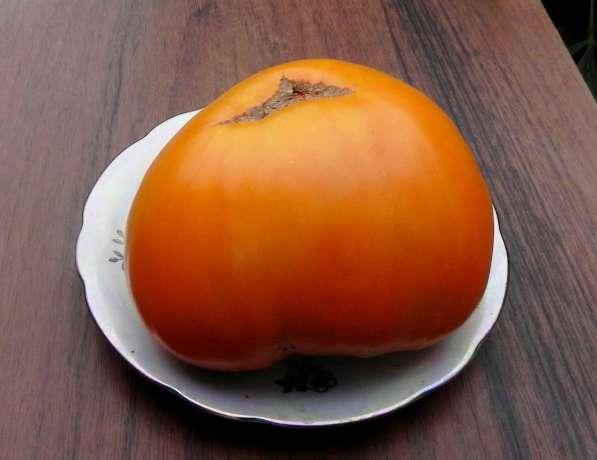 Семена коллекционных сортов помидор, перцев и баклажан