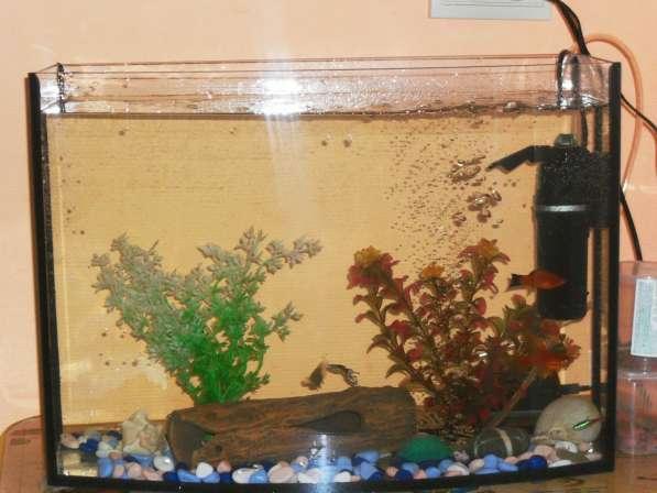 Аквариум с рыбками в Асбесте фото 3
