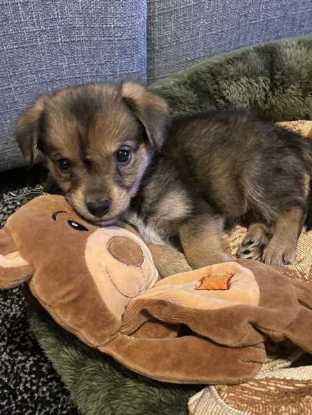 Продаётся щенок 3 месяца