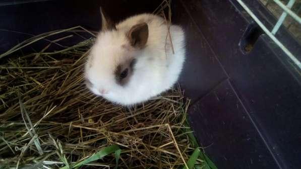 Продаются декоративные кролики в Уфе фото 7