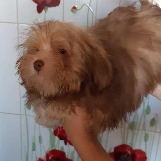 Продажа щенков в Казани фото 3