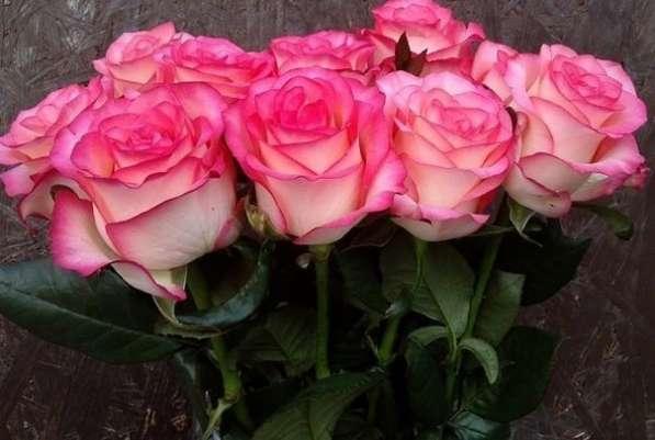 Срез для букетов (розы) в Ростове-на-Дону фото 8