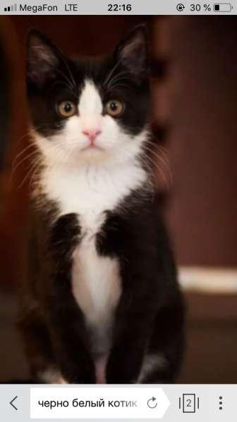 Отдам черно белого котика