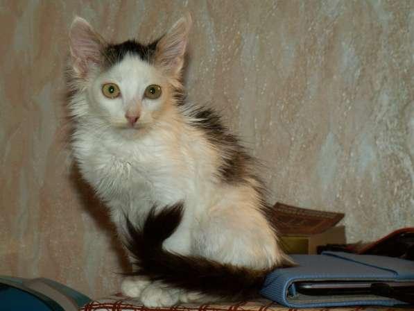 Котик, 2 месяца