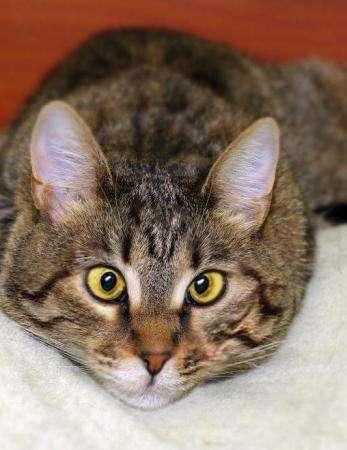 Полосатый косоглазый звездный котик Ганс ищет дом!