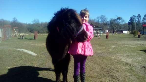День рождения ребенка в питомнике пони. Полесск. в Калининграде фото 4