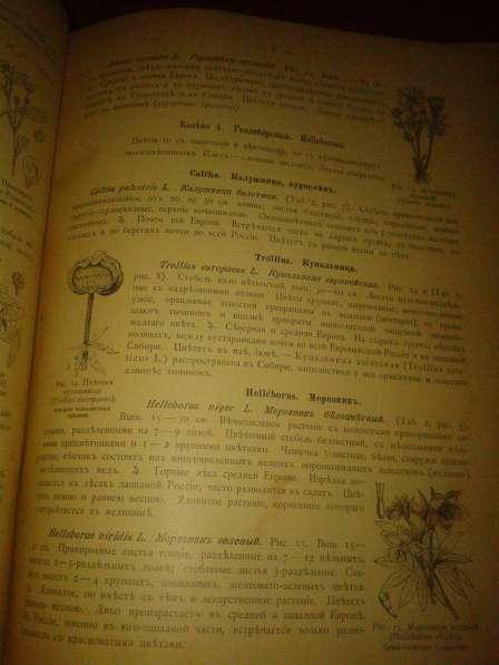 Ботанический атлас по системе Де-Кондоля 1899 в фото 3