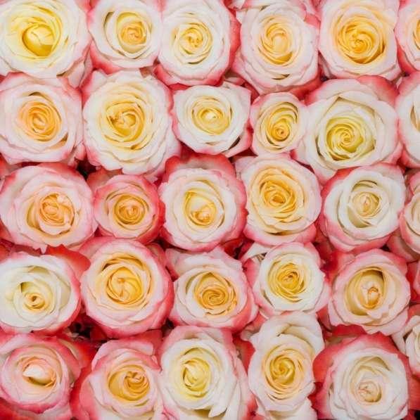 Цветы напрямую от плантаций Эквадора от 1 коробки в Москве фото 9