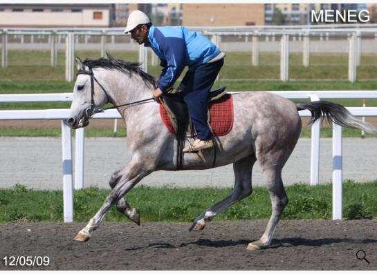 Продажа лошадей арабской чистокровной породы в Абинске фото 3