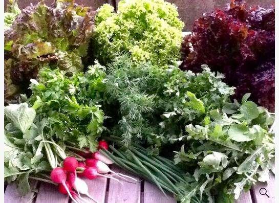 Набор свежей зелени с грядки