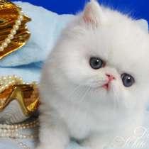 Персидский котенок белого окраса с медными глазами, в Москве
