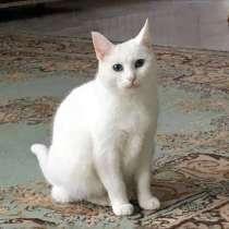 Кошечка Белоснежка ищет дом и доброе сердце, в г.Москва
