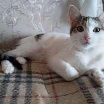 Озорные котята ищут дом, в Москве