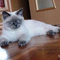 Очень красивый котик британец, в г.Краснодар
