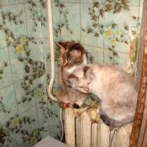 Кошечки в добрые руки!, в Москве