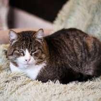 Брутальный большой и ласковый котище ищет дом, в г.Санкт-Петербург