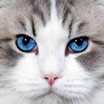 Стрижка кошек в Химках, в Химках