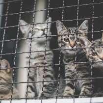 Клепа, Уля и Анфиса, очаровательные котята в дар, в г.Москва