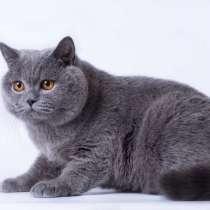 Кошки, в г.Брилон