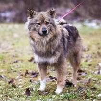 Небольшая пушистая собака ищет дом, в г.Санкт-Петербург