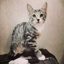 Аккуратный полосатый котенок, в г.Санкт-Петербург
