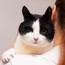 Кошечка Брита в добрые руки, в Москве