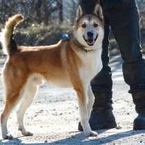 Красивый раскосый пёс, в Санкт-Петербурге