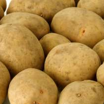 Картофель семенной в Краснодар, в г.Гродно