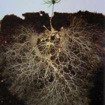 БиоФунгицид Триходерма плюс Микориза Грибокорень, в Сочи