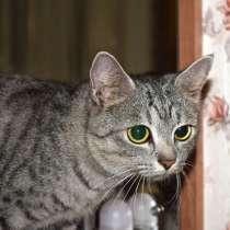 Кошечка в дар, в г.Гомель