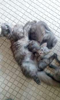 Котята, в Краснодаре