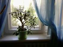 Сдаю 2 комн. квартиру на Союзном, в Нижнем Новгороде