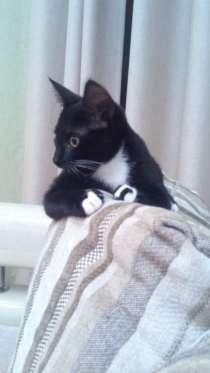 Кошка - Джуни, в Сыктывкаре